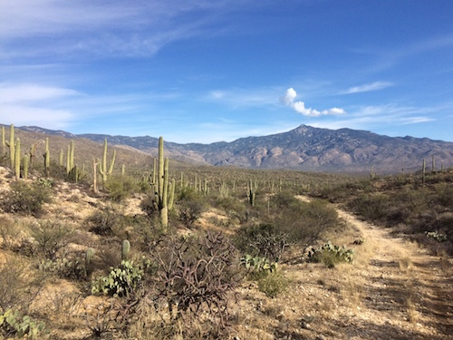 This is what the Arizona Trail looks like near Tucson until you dig in amongst the hills...