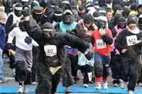 austin-gorillas