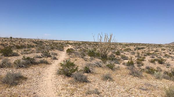 sierra-vista-trail-at-vado-trailhead-525