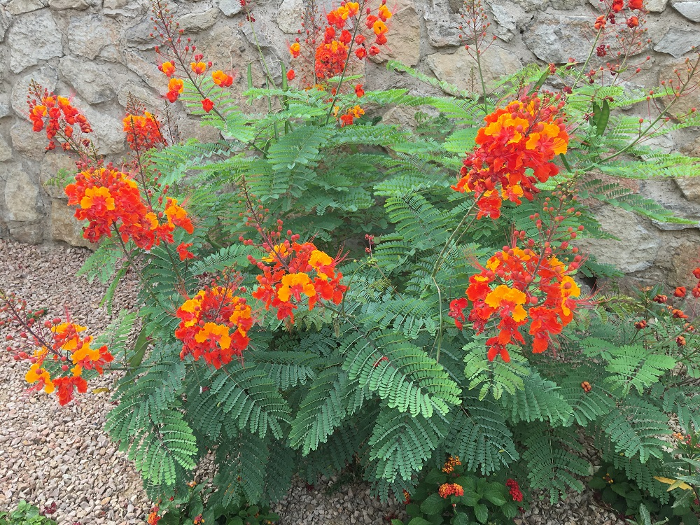 Bright orange flowers in Las Cruces