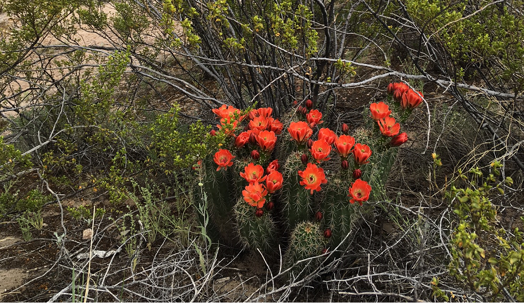 Spring Blooms in the Desert