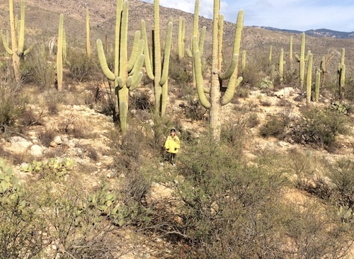 Me standing in the middle of a cactus forest.